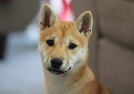 Elon Musk Endorses Dogecoin, DOGE Price Increases from $0.03 to $0.05